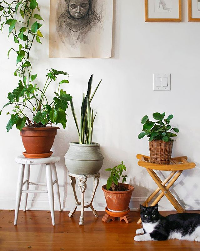 "Anyone else think ""Hm, could that be a plant stand? 🤔"" whenever bringing something home? Here I wanted to show a few plant elevating options in my own home. It goes without saying that you don't need to buy a plant stand to actually make a plant … stand! 🌱🔝 ⠀ From the left: ⠀ 1. A white wabi-sabi stool with crackling paint 2. An iron candle holder 3. Some terracotta pot feet 4. A foldable wooden camper stool ⠀ Being able to elevate plants is great because it allows you to play with light levels ☀️. You don't need to even use stands. If you've got plants on a desk, consider wooden blocks, or upturned pots to raise the back row. The idea is to play around with your plant placement by considering not only the proximity to the window, but also height!❓What are some non-plant stand, plant stands you use?"