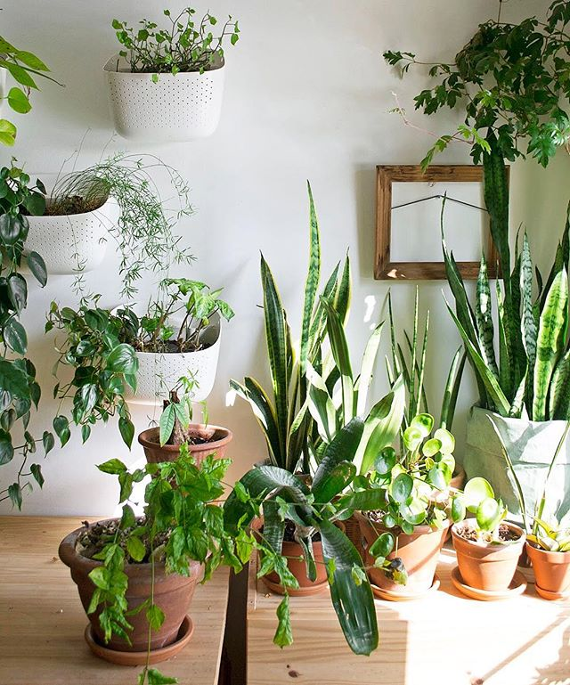How To Do Water Propagation — Fieldnotes by Studioplants
