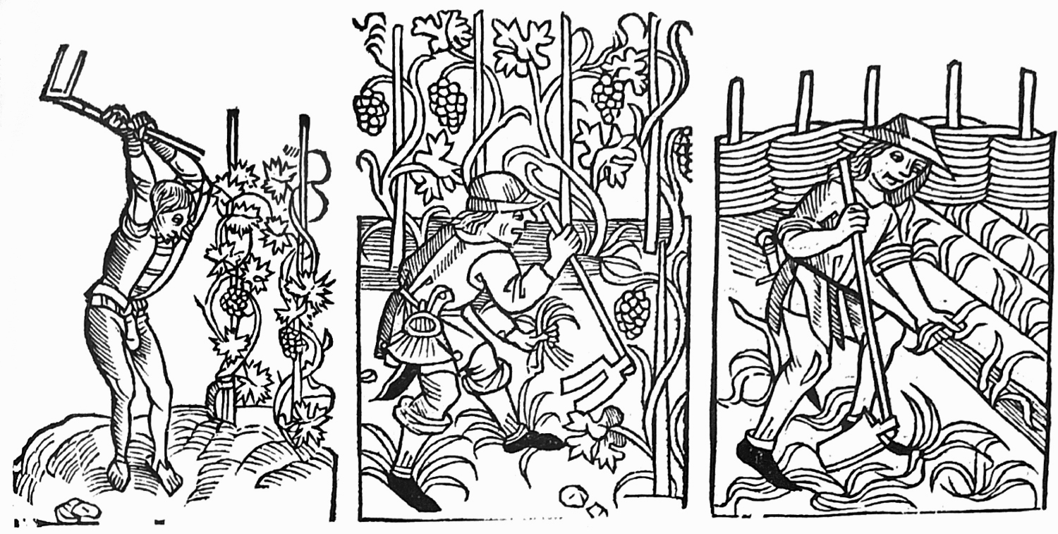 Illustration from Anthony Huxley's 'An Illustrated History of Gardening', artist unknown