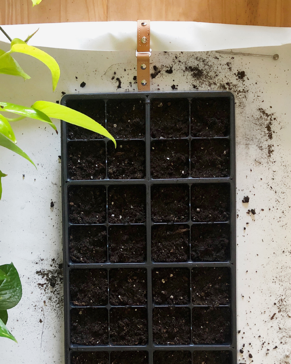 Seed starting? No problem, keep that dirt in 'here.