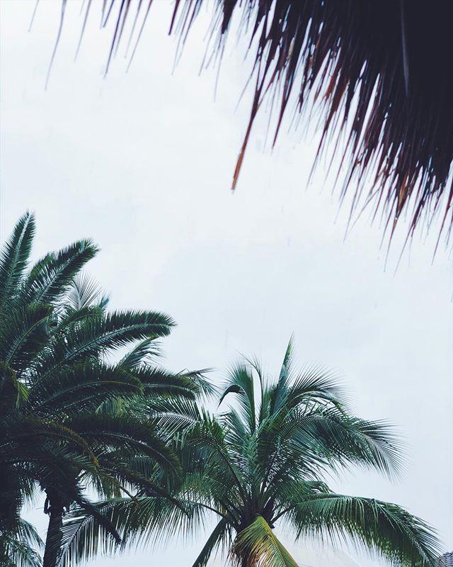 ⛈ Farewell Cozumel! 🐬🌴 #rainraingoawaya