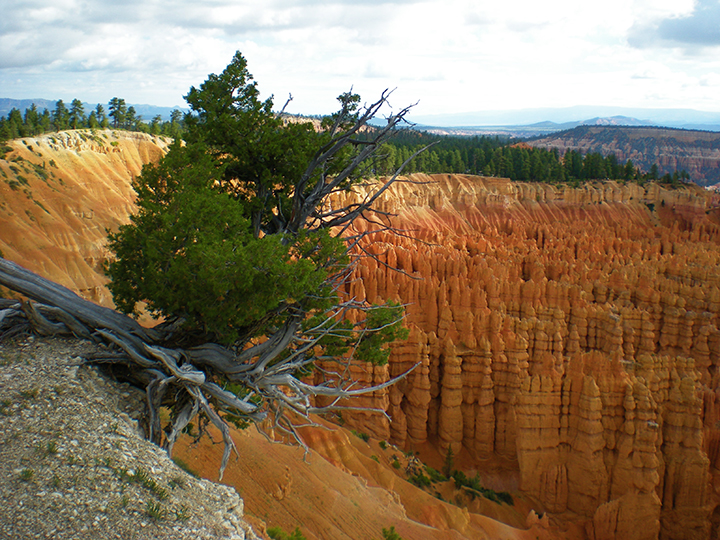 Bryce Canyon, Utah, USA, 2015