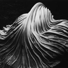 Cabbage Leaf - EdwardWeston