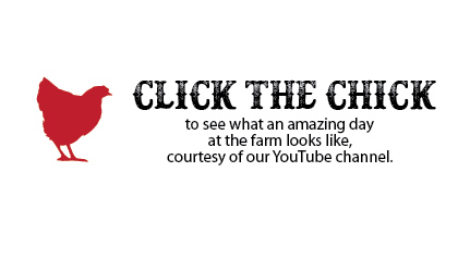 click the chick.jpg
