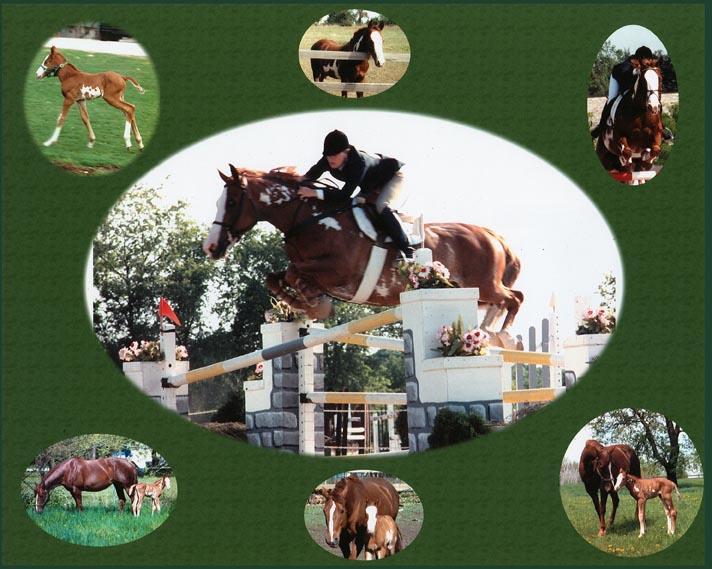 Horse_Collage.jpg