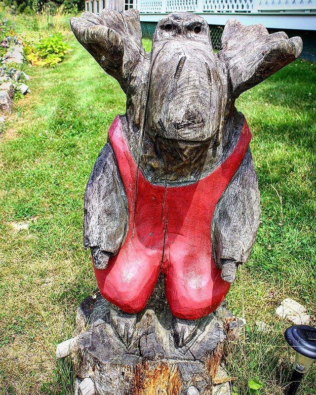 Resident Moose #islesforddock #islesfordmaine #moose #mainemoose #woodenmoose #littlecranberry