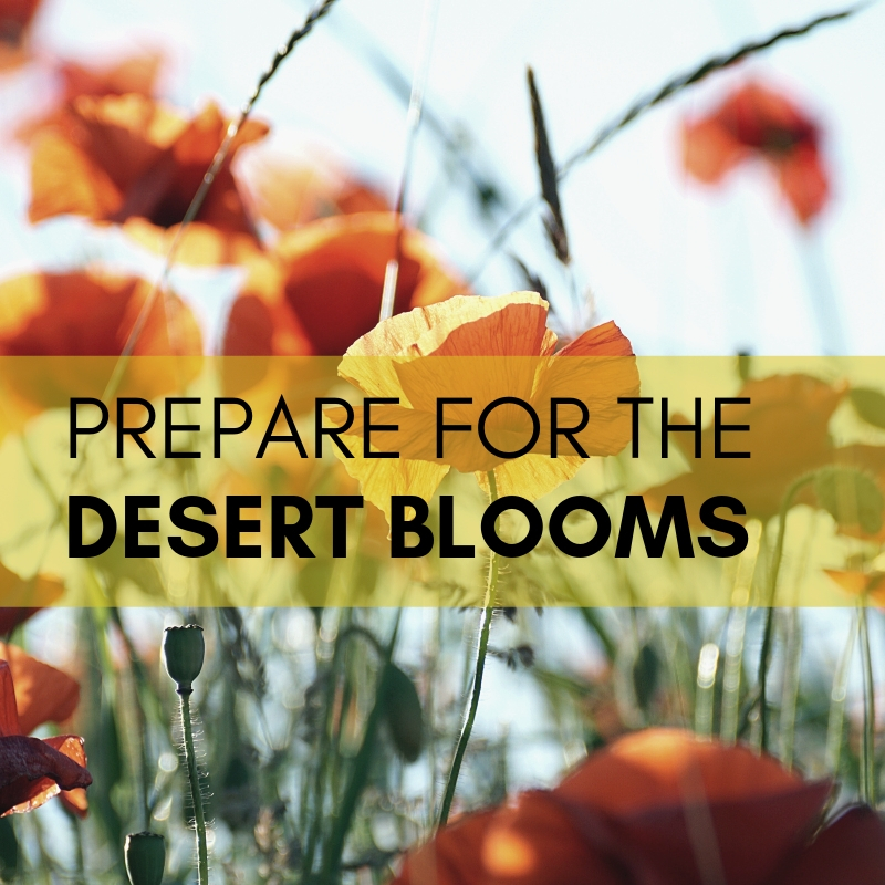 desertblooms.jpg