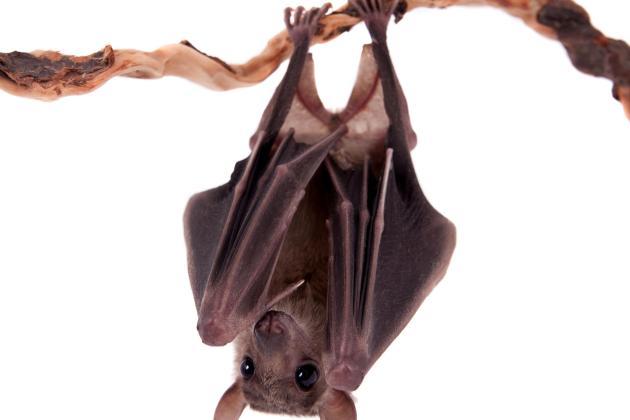 Bat Control - Write here…