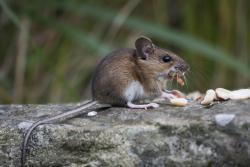 Wild Animal Control -