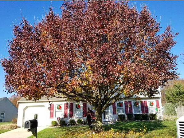 Plant Healthcare - Do Your Trees Look Stressed? Tree Awareness is one of the few tree service companies that offers a full healthcare checkup for any weak, stressed and/or damaged trees in your yard that you would like to see healthy and beautiful again.READ MORE ▸