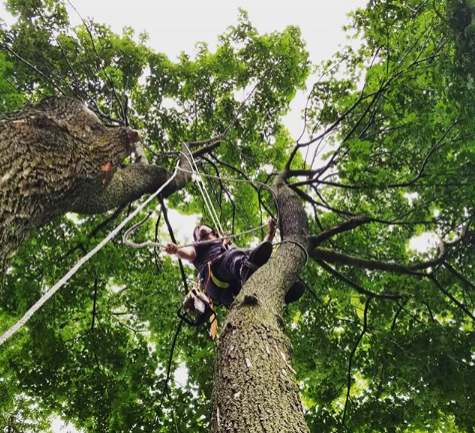 Tree Removal - If They Are Not Fully Insured and Fully Experienced, Don't Use Them! The Team at Tree Awareness are the experts in tree removal and stump grindingREAD MORE ▸ .