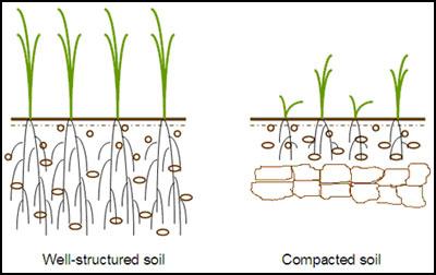 Compacted-Soil 2.jpg