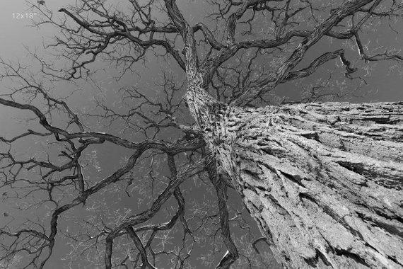 winter canopy.jpg