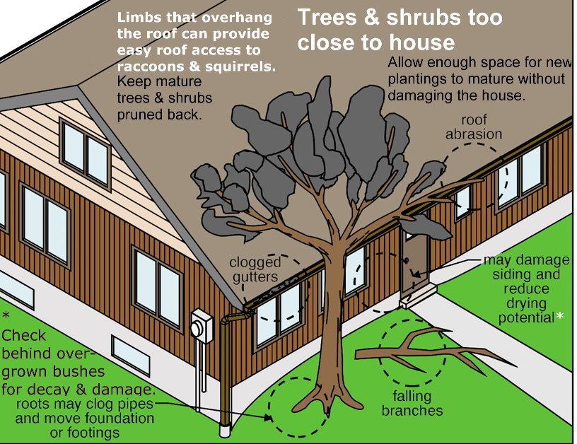 TREES%20AND%20SHRUBS%20TOO%20CLOSE.jpg