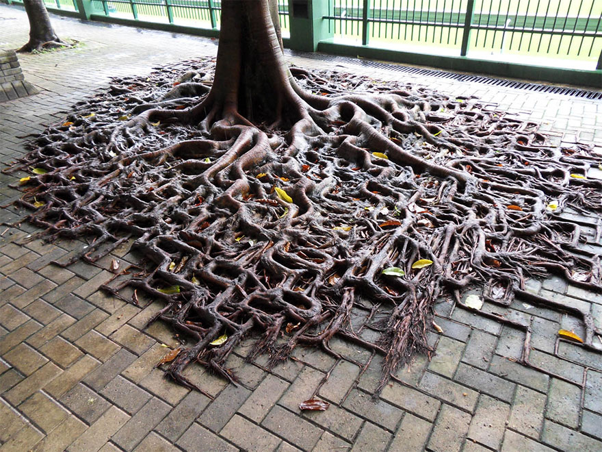 tree roots winning.jpg