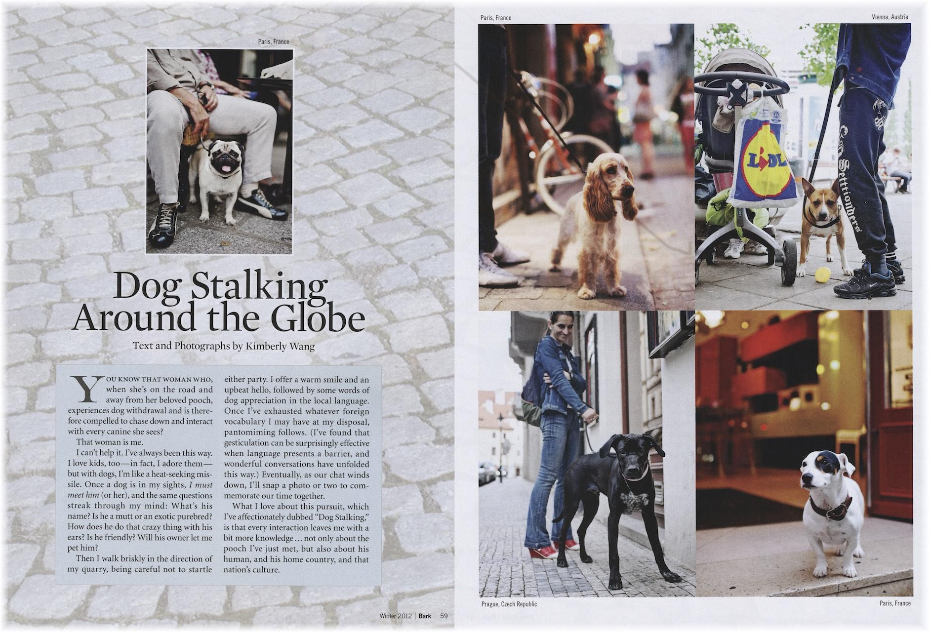 The Bark Dog Stalking1.jpg