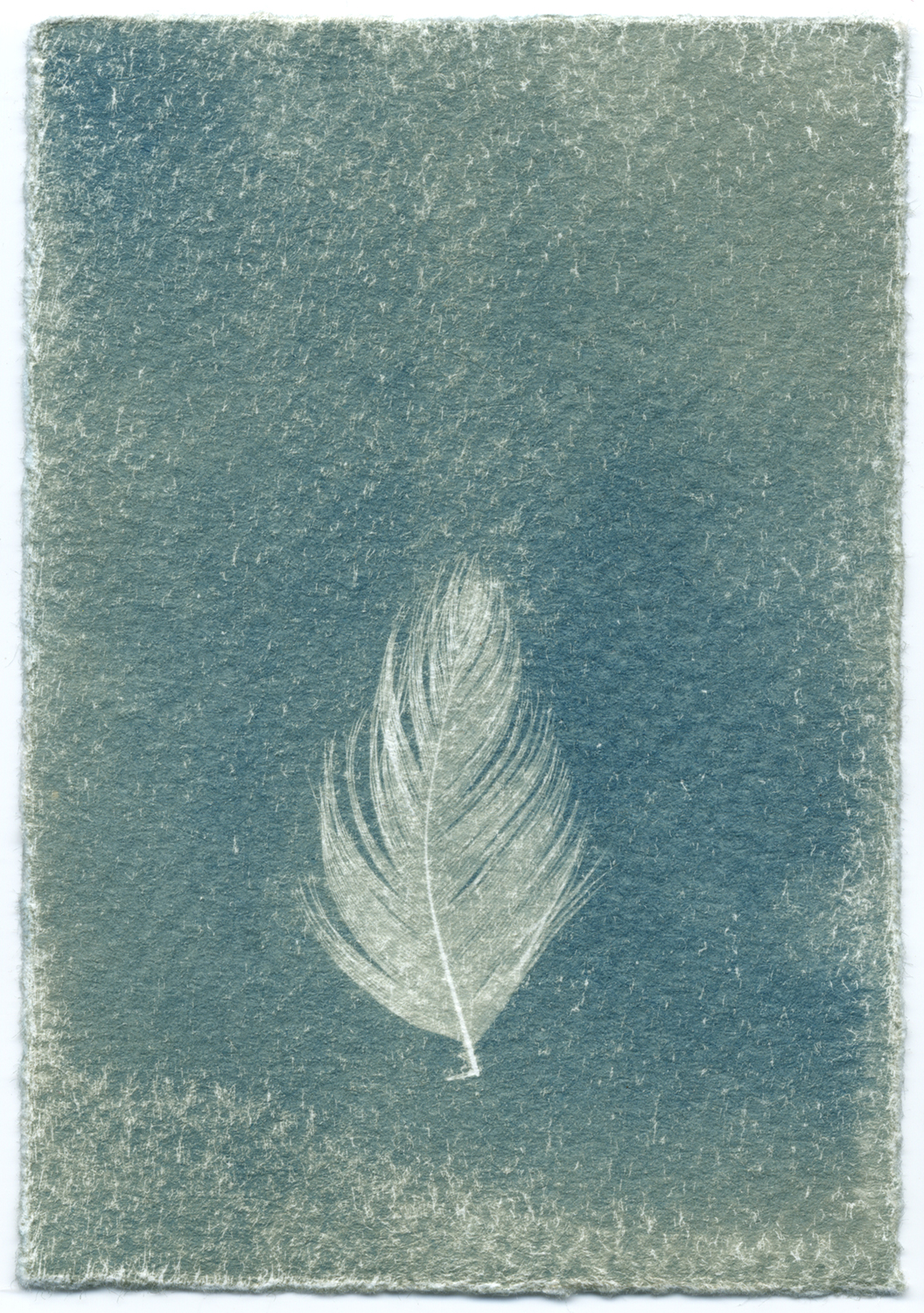 Feathers #14-1