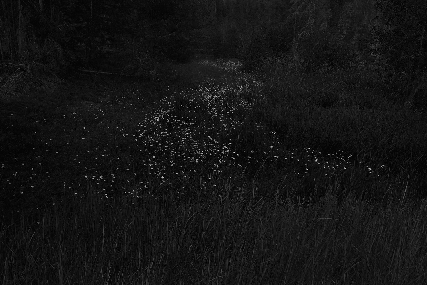 Trail, from the series The Forest