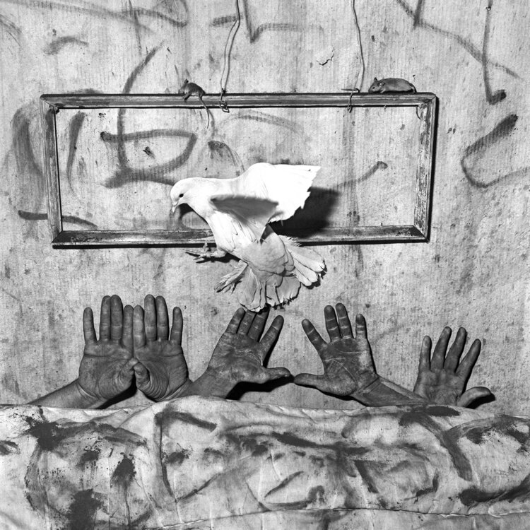 Five Hands, 2006, from 'Asylum of the Birds'