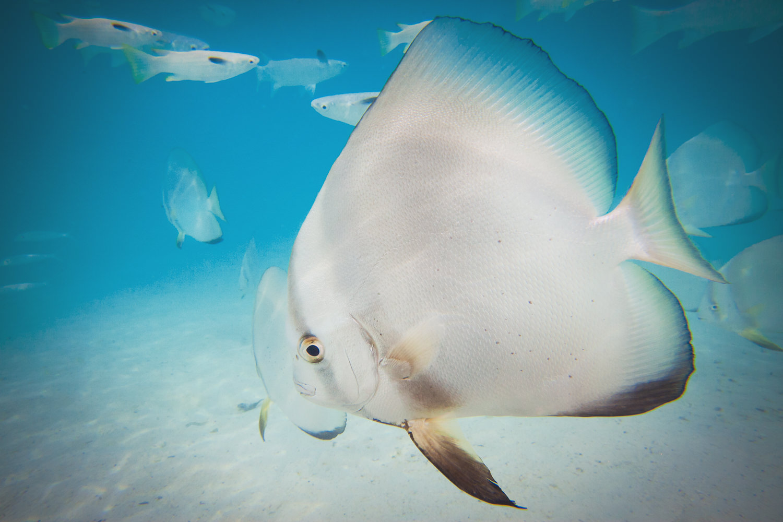 Four Seasons Bora Bora Wedding - Tropical Fish