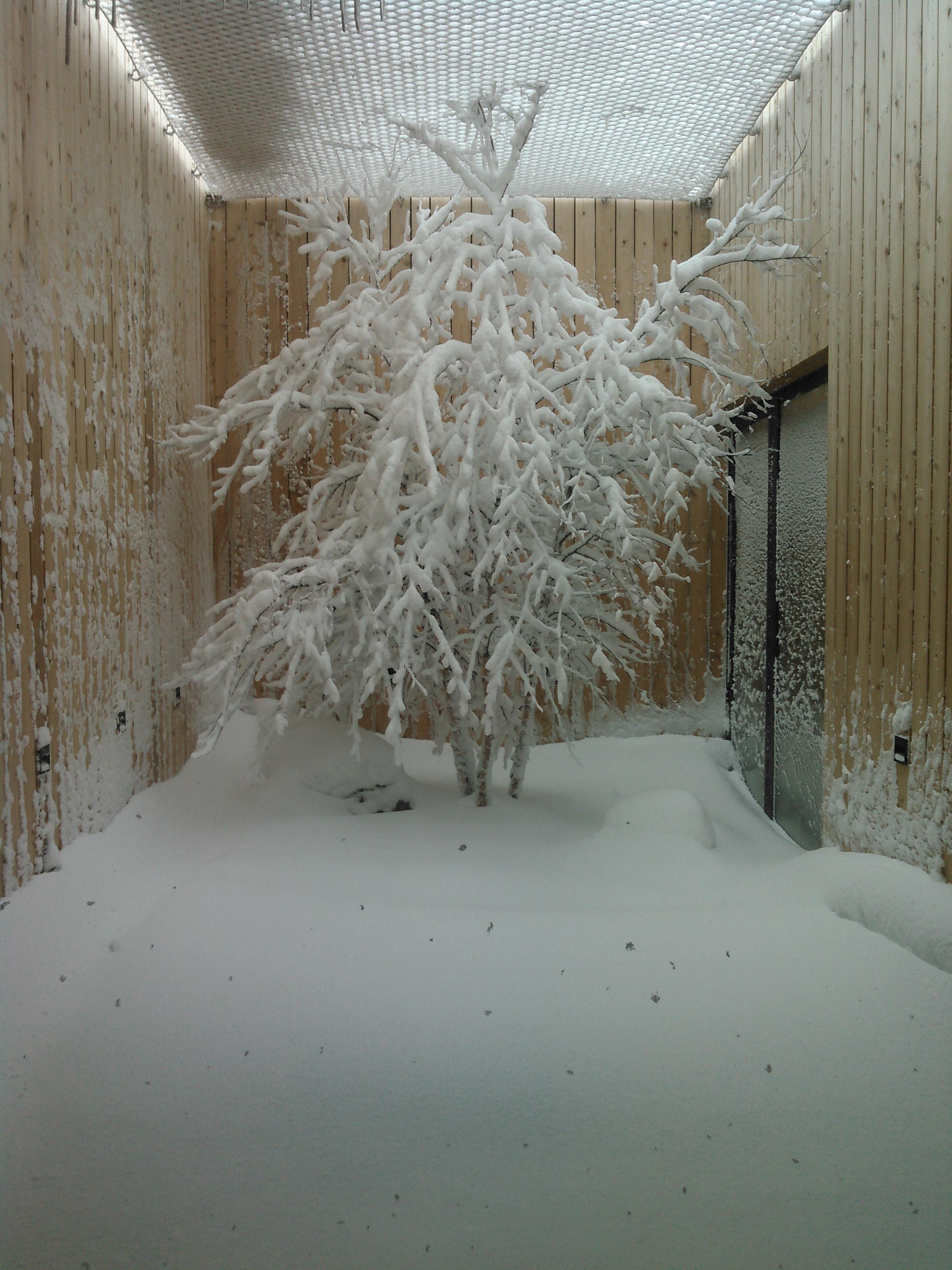 Redhead atrium1 winter.jpg
