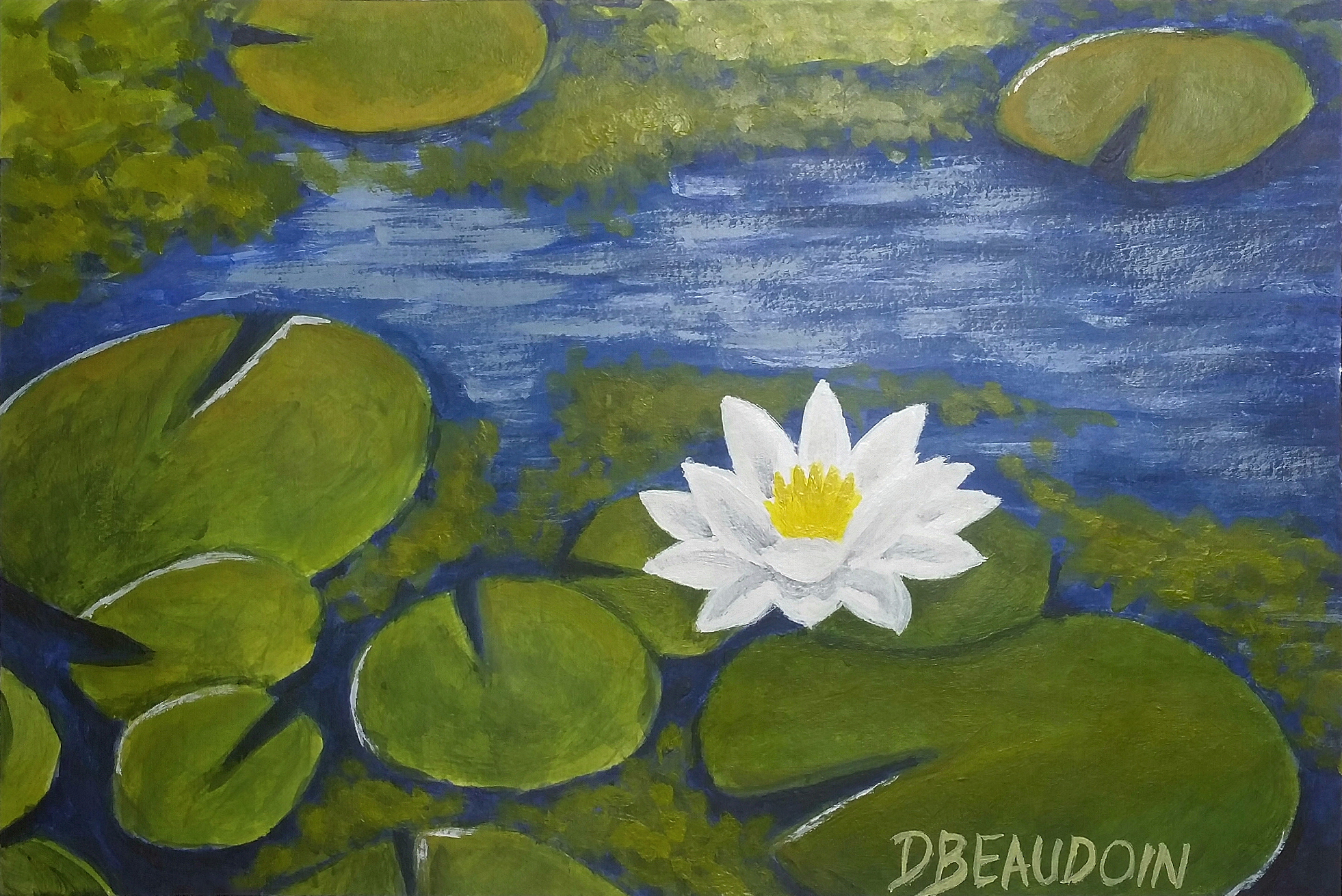 Nénuphars - Water Lilies