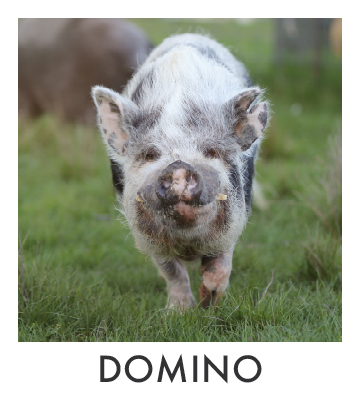 Domino.jpg