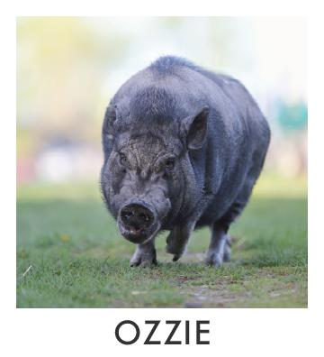 Ozzie.jpg