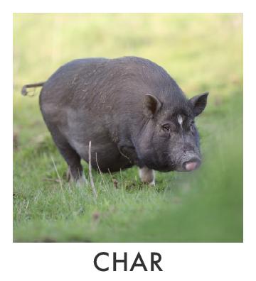 Char.jpg