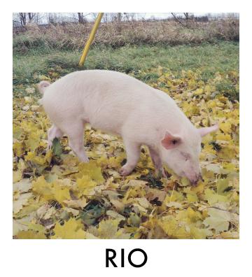 Rio Thumbnail.jpg