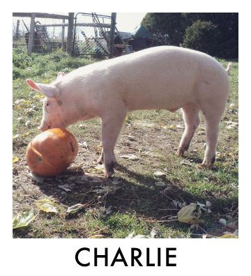 Charlie Thumbnail.jpg