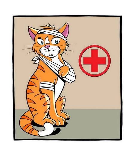 Continued Care Cat
