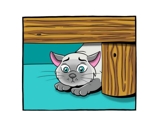 Shy Guy Cat