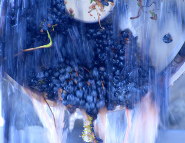 MORE ABOUT ORGANIC & PRESERVATIVE FREE WINEMAKING -