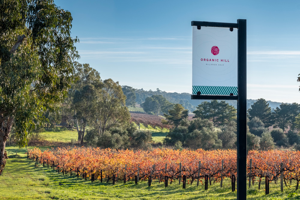 A little history - The 'Hill family' have an affinity with wine in South Australia, dating back over three generations, to the arrival of the first settlers.