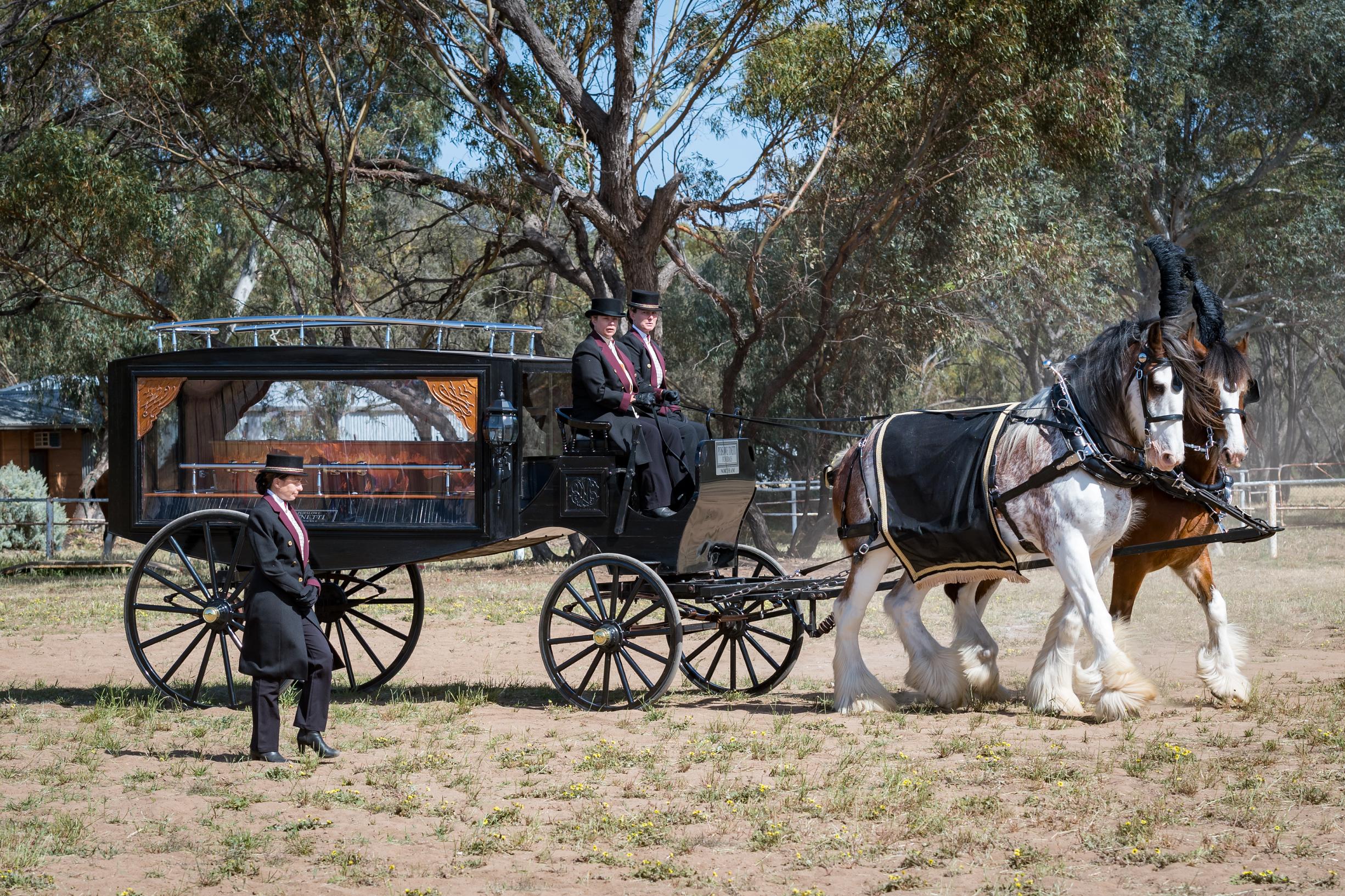 Hearse LIvelighter Heavy Horse Festival 1.jpg