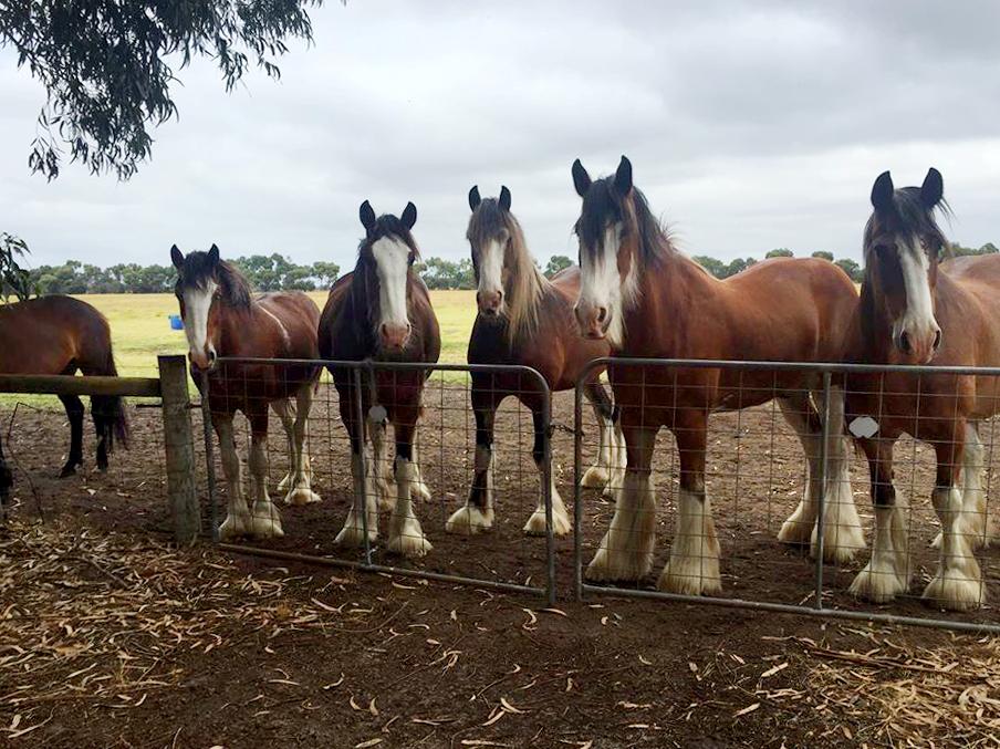 Horses at gate.JPG