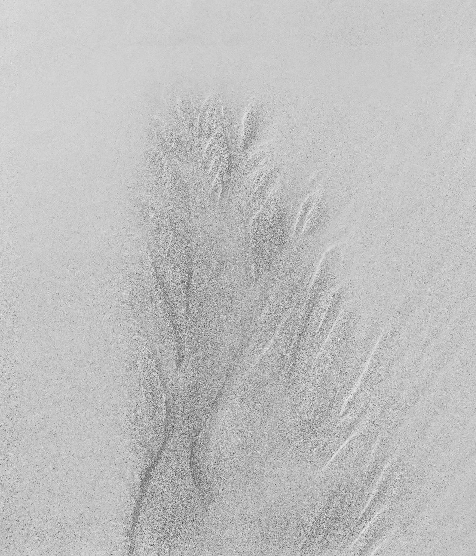 """ Sand Tree ""   San Sebastian, Spain"