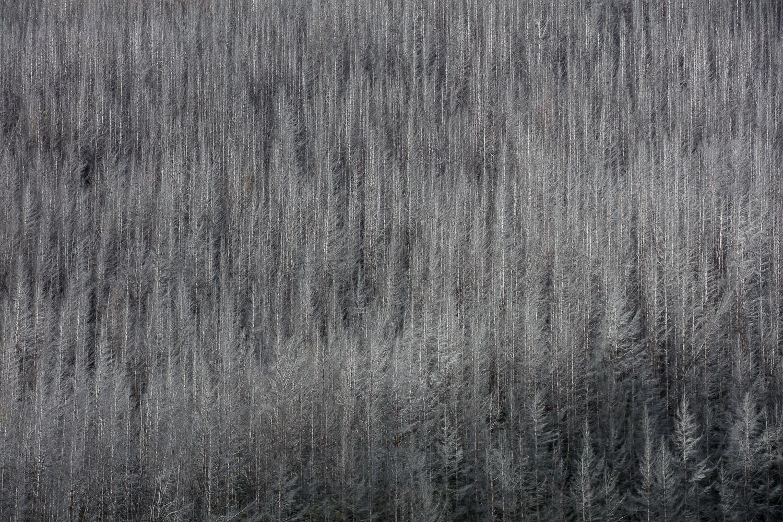 """Forest Army""    Moke Lake, New Zealand"