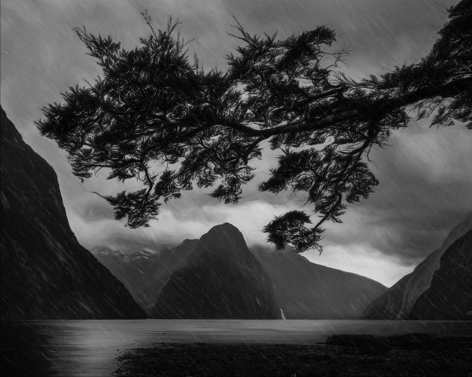 """Milford Tree""    Milford Sound, New Zealand."