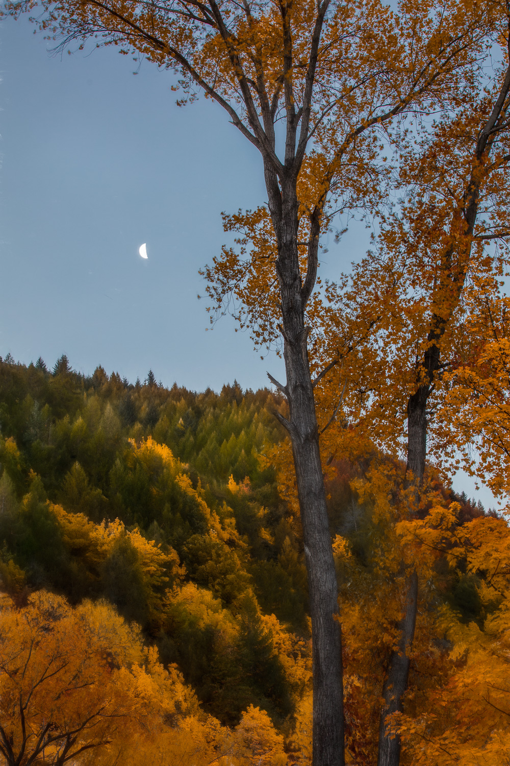 """Moonrise over Arrowtown""    Arrowtown, New Zealand."