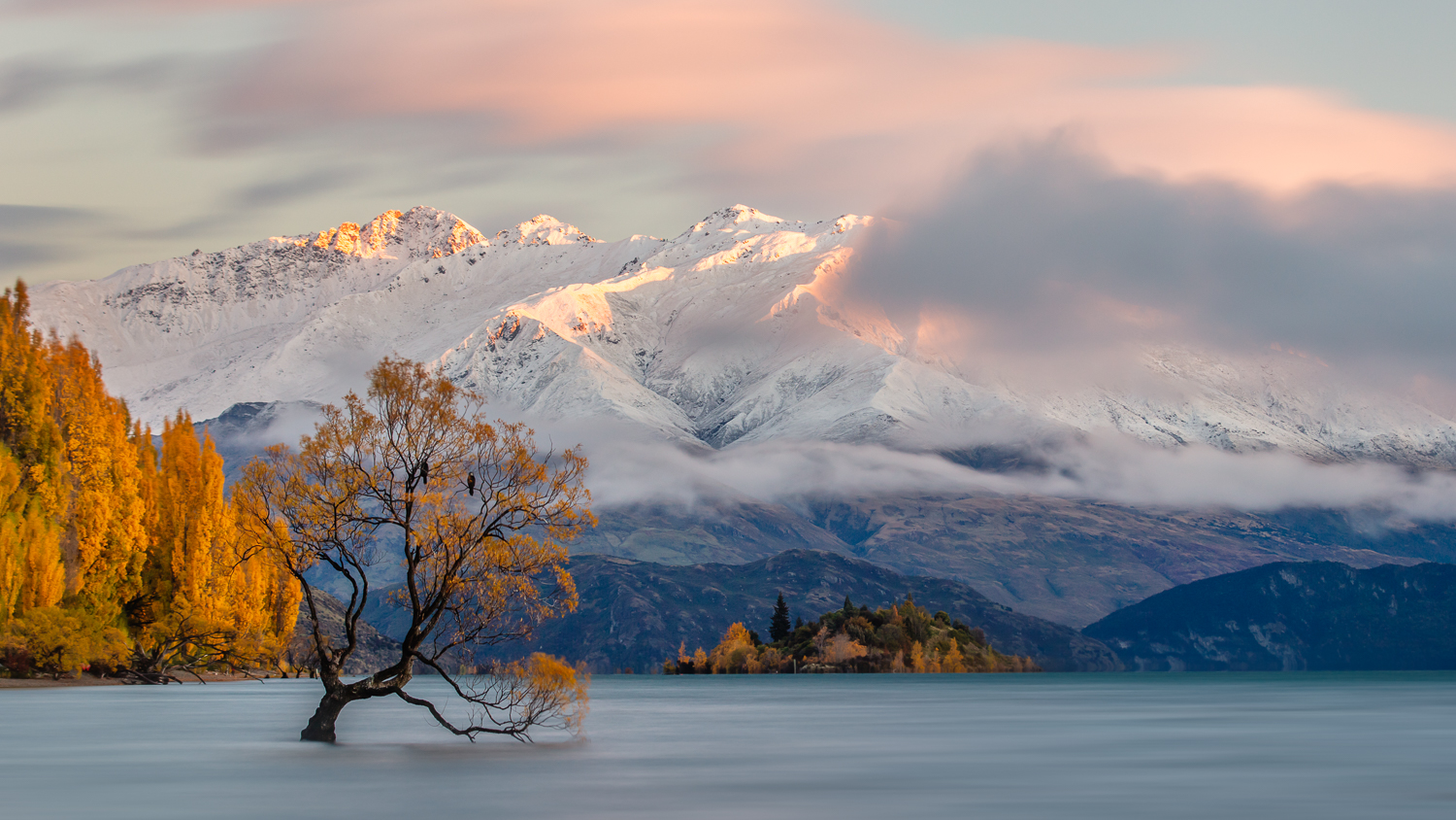 """ That Tree""    Lake Wanaka, New Zealand."