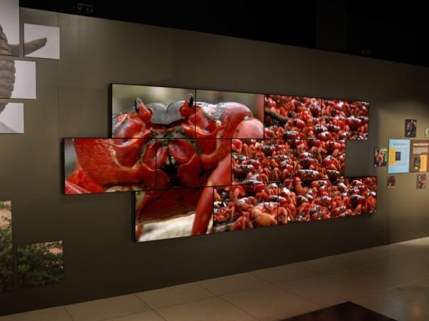 Videowall-Planar-National-Geographic-Museum-Washington-2-605x453.jpg