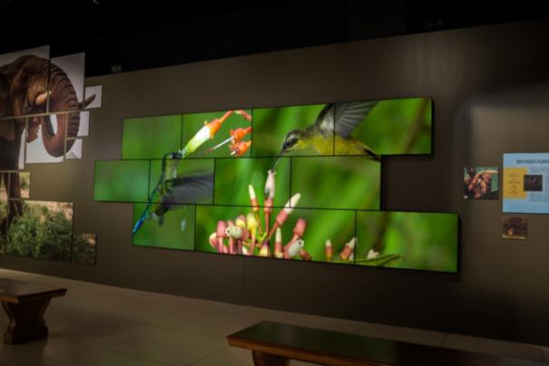 Videowall-Planar-National-Geographic-Museum-Washington-1.jpg