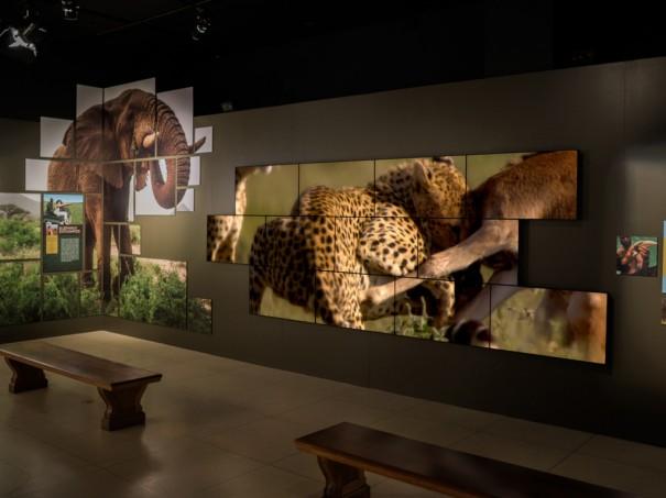 Videowall-Planar-National-Geographic-Museum-Washington-3-605x453.jpg