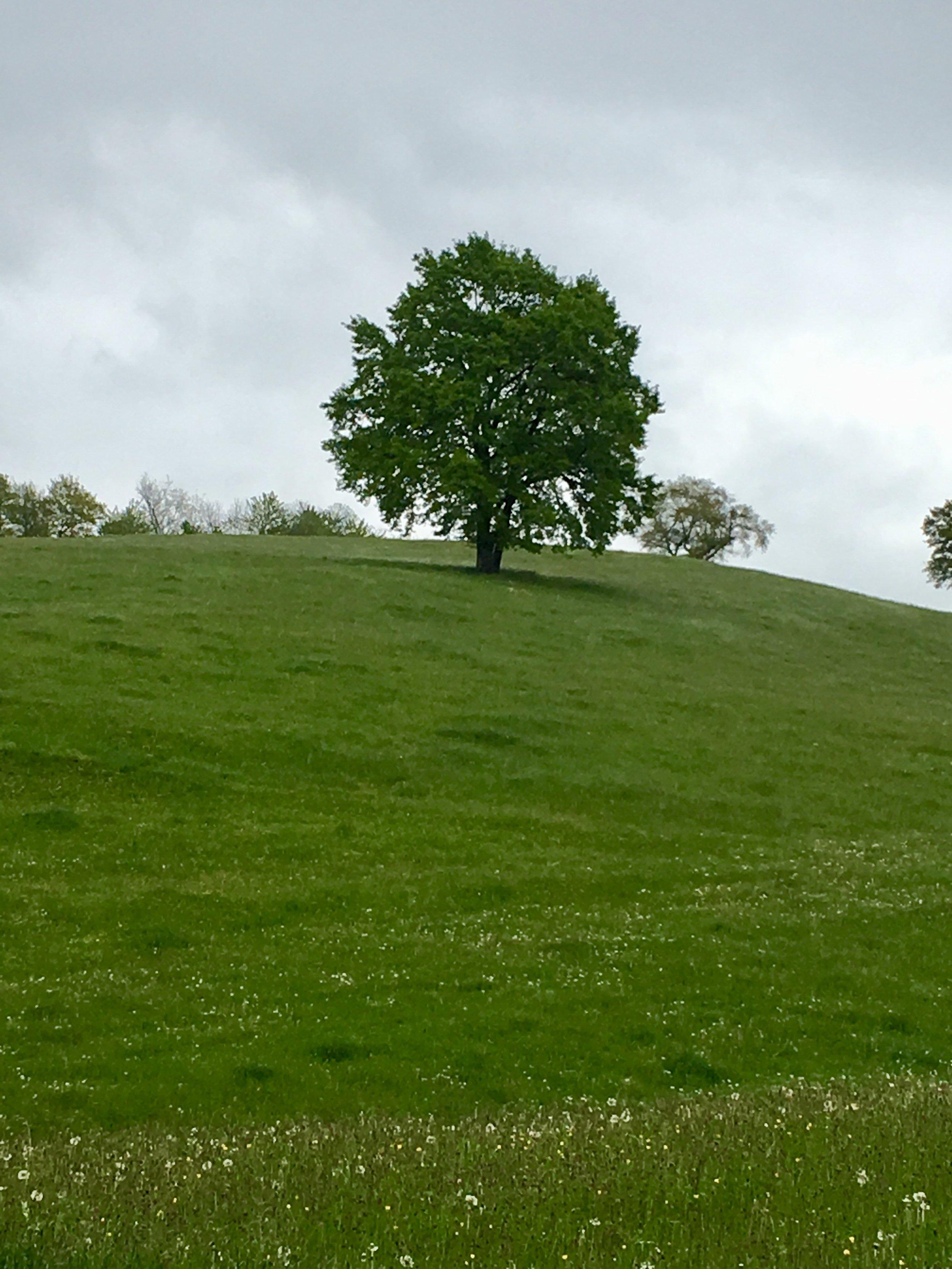 Die Herberge auf dem vorigen Bild war eine Herausforderung, zu sechst auf etwa 9m2…..,  die Natur war immer und überall schön