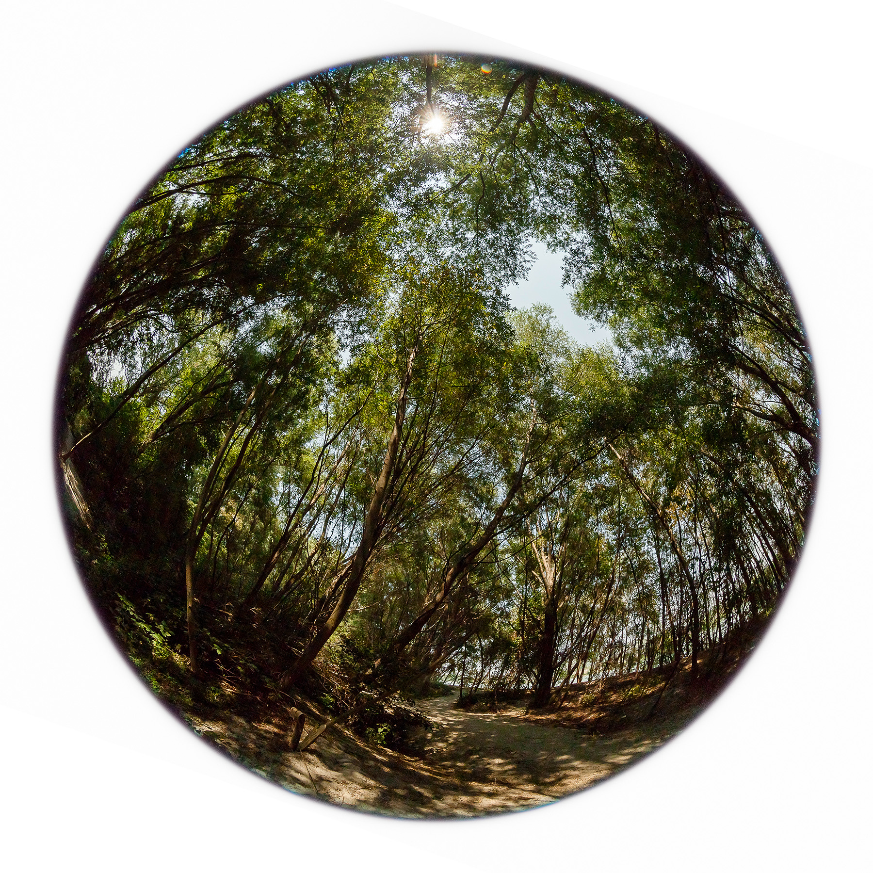 Heliocentric_VideoFrame.jpg