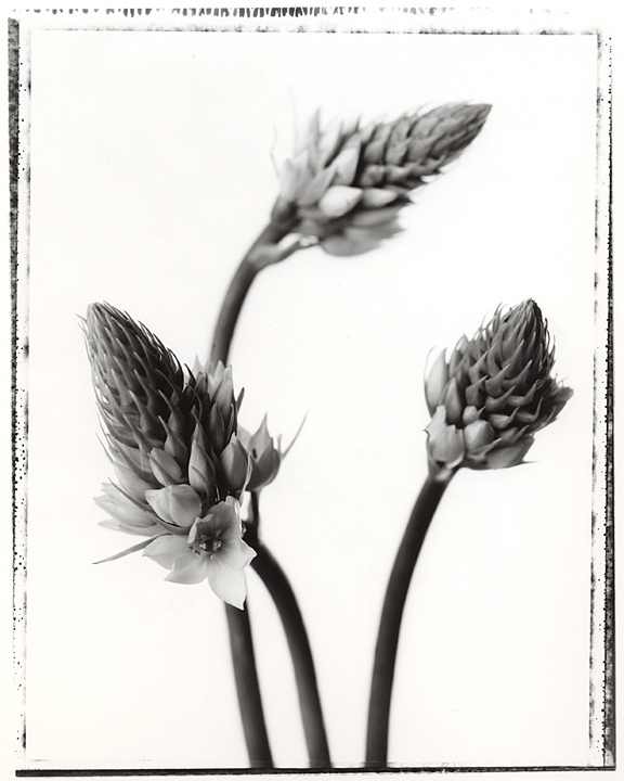 flower_trio.jpg