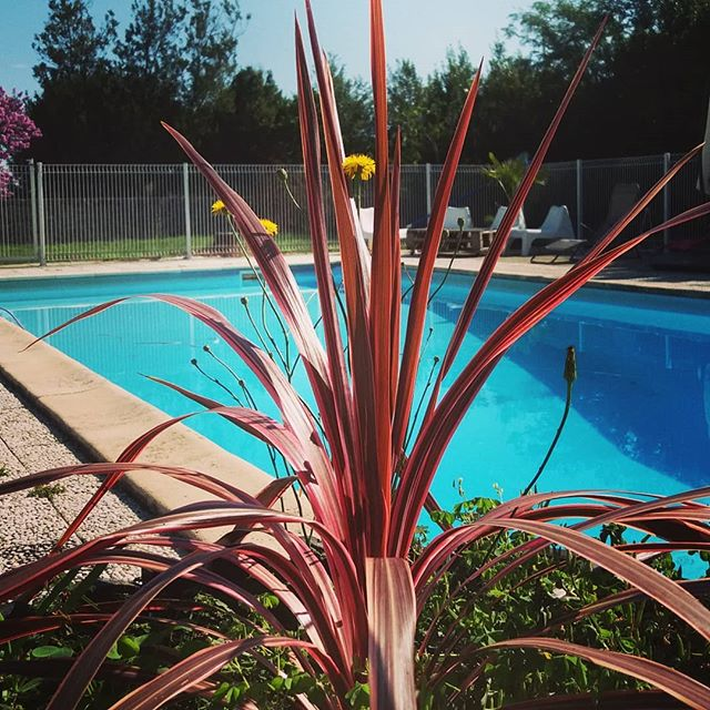 Que diriez-vous d'une journée farniente au bord de la piscine ?  Infos & réservations: www.lavaliere-medoc.com  #pool #piscine #sudouest #gironde #medoc #holidays #maisondevacance #winelife #winelover #chateaulavaliere #location #maisondecharme #lifestyle #flower #luxuryvilla #vacances #weekend #travel #garden #winetours #oenotourisme #chateau #instapic #intatravel #luxurytravel #picoftheday #conciergerie #instawine #placetotravel #lavaliere