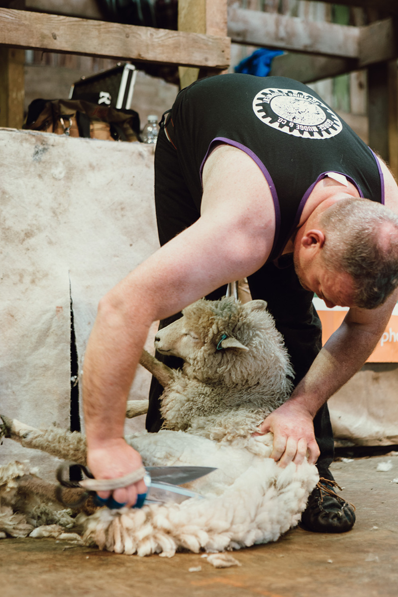 Blade shearing on Fernhill Farm.jpg